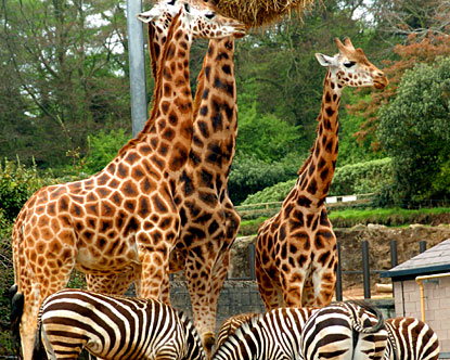 More than one million visitors entered Dublin Zoo in 2012
